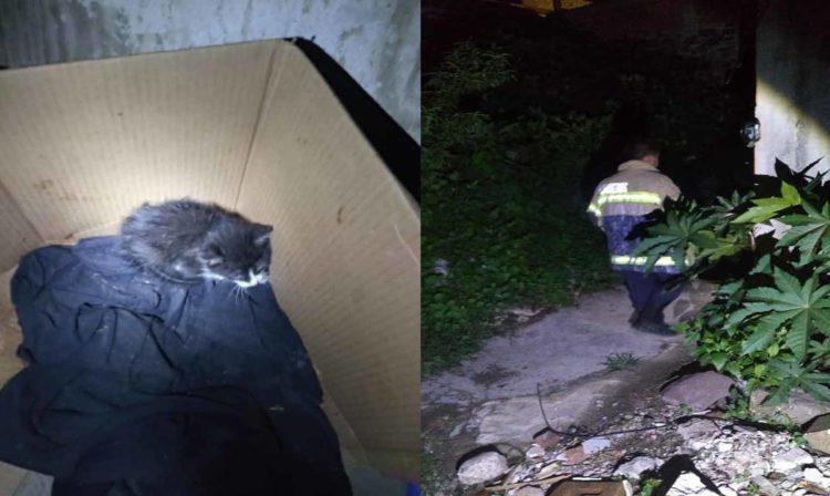 #Michoacán Bomberos Rescatan A Michi Atorado