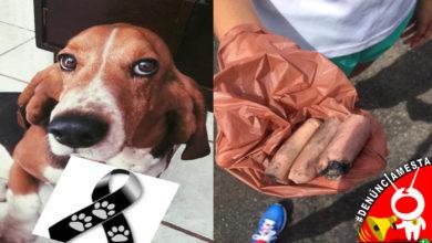 Photo of #Denúnciamesta Ahora también envenenan perritos con salchichas en Morelia
