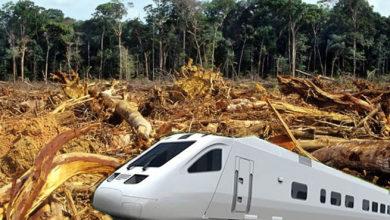 Photo of Derribarán Más De 11 Mil Árboles Durante La Primera Fase De La Construcción Del Tren Maya