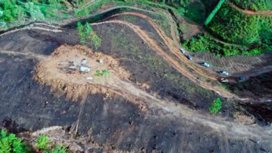 Photo of #Michoacán Indignación Y Preocupación Por Brutal Deforestación En Villa Madero Por Agucateros
