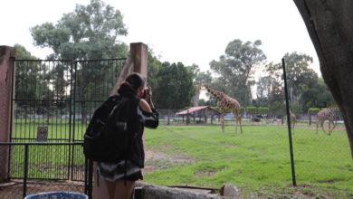 Photo of Este Sábado Zoológico De Morelia Abre Sus Puertas Tras Contingencia