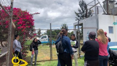 Photo of #Morelia Tras Desmantelamiento De Refugio, Animalistas Se Manifiestan