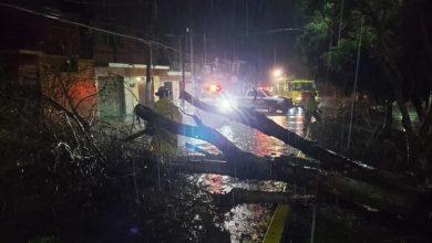 Photo of #Morelia Árbol Derribado, Apagones Y Encharcamientos, Saldo De Tormenta De Esta Noche