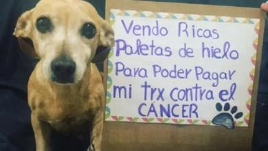 Photo of Perrita De Querétaro Vende Paletas Para Pagar Su Tratamiento De Cáncer