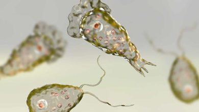Photo of ¡Wey Ya!, Confirman Caso de Ameba Come Cerebros En Florida