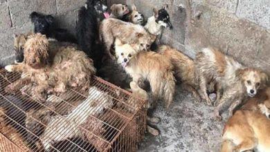 Photo of Por Escasez De Alimentos Corea Del Norte Manda Comprar Perritos Pa' Comer