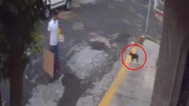 Photo of #Morelia Difunden El Ataque Al Hijo Del Envenenador De Perros