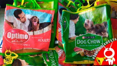 Photo of #AlertaPeluda Hacen bolsas de mandado con costales de croquetas para ayudar a perritos