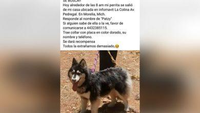 Photo of #AlertaPeluda Ayudar a localizar a Patzy en Morelia