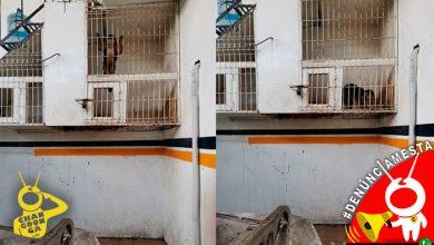 Photo of #Denúnciamesta Mono vive dentro de jaula pequeñita en taller hojalatero de Morelia