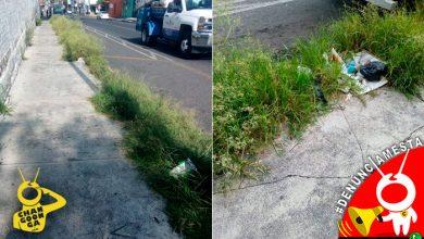 Photo of #Denúnciamesta Pasto grande y harta basura sobre Bucareli, atrás del Venustiano