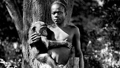 Photo of #DeShock Después De 100 Años Zoo Se Disculpa Por Haber Enjaulado A Africano Con Monos
