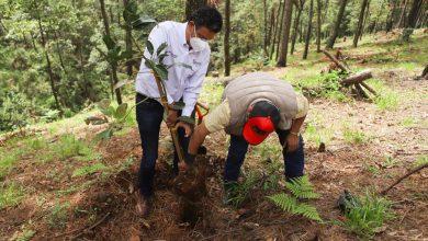 Photo of #Michoacán Autoridades Quitan Plantación De Aguacate De Un Bosque