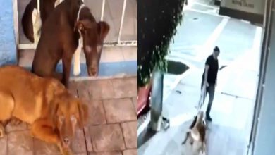 Photo of Pasa En México: Doña Arrastra Y Abandona Tres Peludos