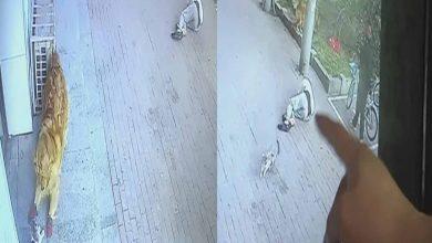 #Video Gato Cae Del Cielo, Noquea A Hombre, después Pelea Vs Perro Con Zapatos