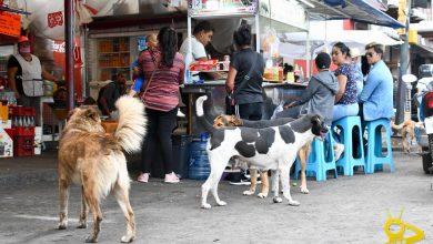 Photo of Comerciantes Se Quejan Pero Alcaldesa De Quiroga Niega Descontrol De Perros Callejeros