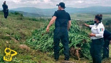 Photo of Matan A Balazos A 2 Hombres Cerca De Plantío De Mota En Morelia
