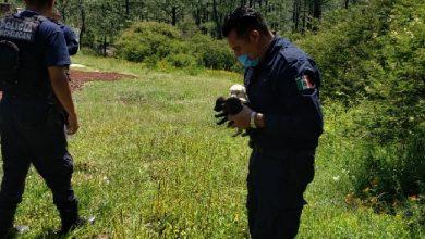 Photo of #Morelia Polis Rescatan A Cachorros Abandonados En Predio