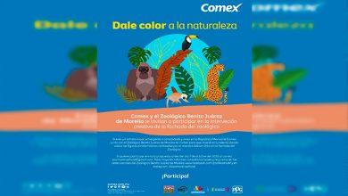 Photo of Zoo Moreliano Convoca Artistas A Pintar Murales