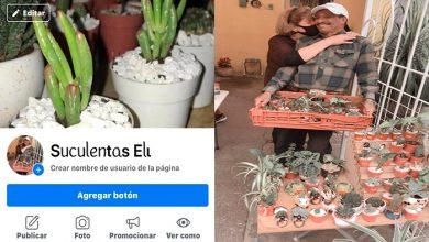 Photo of #Morelia Abuelitos Desempleados Por Pandemia Ahora Venden Suculentas Por Internet