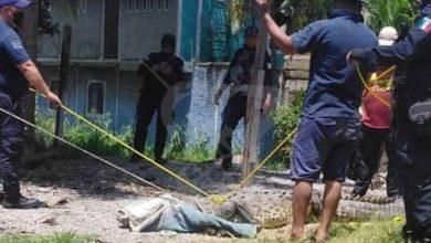 #Michoacán Cocodrilo De 4 Metros Sale A Pasear Y Polis Lo Detienen