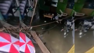 Photo of #Video Por Fuertes Lluvias E Inundaciones Cocodrilo Se Mete A Nadar A Casa En Tabasco