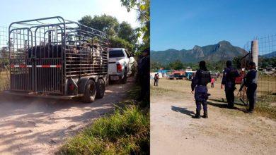 Photo of #Michoacán Polis Evitan Que Se Haga Jaripeo Pa´ Que No Se Disperse El COVID