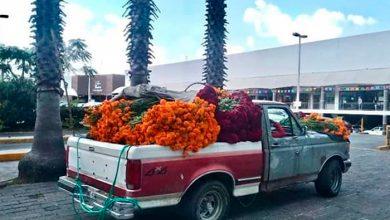 Photo of #Morelia Productores De Cempasúchil Llegan A Plaza Fiesta Camelinas, Haz Barrio Y Compra Tus Manojos