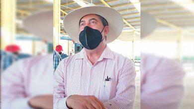 Photo of Nos Dejaron Endeudados Y Sin Poder Vender: Toronjeros Michoacanos