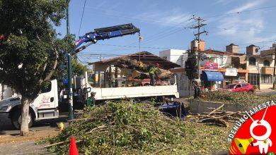 Photo of #Denúnciamesta Vecinos molestos por tala de árboles en Morelia