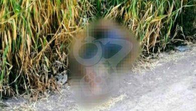 Photo of Hallan Hombre Muerto Y Maniatado En Tarímbaro