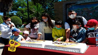Photo of Zoo De Morelia Celebra Su Cumple 50 Con Pasteles Para Cada Animal