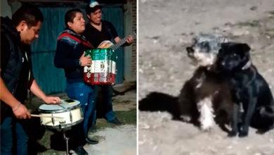 Photo of Pasa En México: Peludo Lleva A Su Perrita A Tocada De Músicos