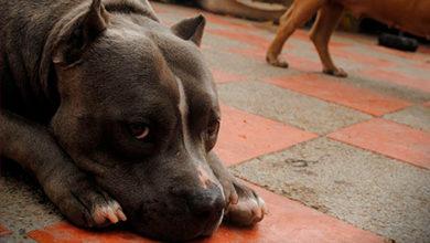 """Photo of MORENA Busca Cárcel Para Quienes Mutilen Animalitos Por """"Estética"""""""