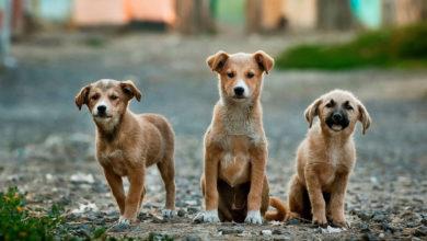 Photo of Seguro Peludo: Banco Ofrece Asegurar A Tus Mascotas