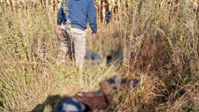 Photo of #Michoacán Hallan Sin Vida A Mujer Y A Tres Hombres Tras Ser Secuestrados