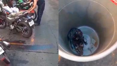 """Photo of #Morelia """"Tigres"""" Capturan A Tlacuachito Agresivo Que Se Metió A Negocio"""