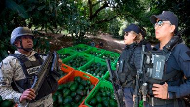 Photo of #Michoacán Tras Quema De Empacadoras Reforzarán Seguridad A Huertos Aguacateros