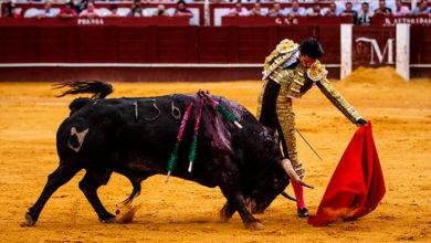 Photo of ¡OLÉ! UNESCO Rechaza Corridas De Toros Como Patrimonio Mundial De La Humanidad