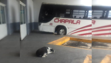 "Photo of En México: Peludita ""Vaca"" Espera Día Con Día A Don Coco En Central De Autobuses"