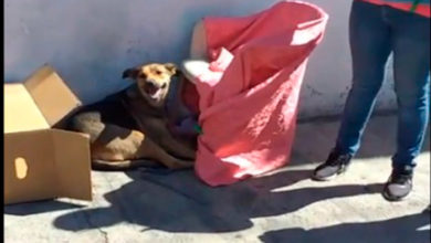 Photo of #Morelia Julio Guillen Busca Un Hogar Para Peludita Y Sus Cachorritos