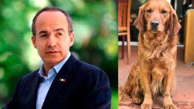 """Photo of Calderón Le Da Ultimo Adiós A """"Fango"""" Su Mejor Amigo Peludo"""
