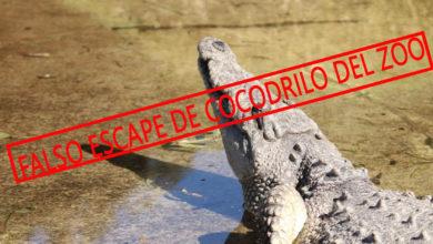 Photo of #Morelia Zoológico Desmiente Que Cocodrilo Se Haya Dado A La fuga