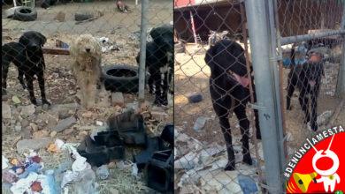 Photo of #Denúnciamesta Dejan a perritos encerrados, sin agua y en pésimas condiciones