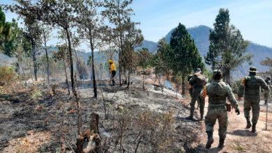 """Photo of #Michoacán Incendio En Cerro De """"Las Joyitas"""" Controlado Al 100%"""