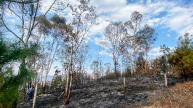 Photo of #Morelia 3 Hectáreas De Bosque Quedan Afectadas Tras Incendio En Santa María