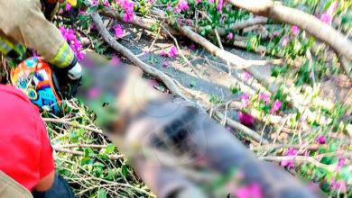 Photo of #Michoacán Chavo Motociclista Muere Aplastado Por Un Árbol