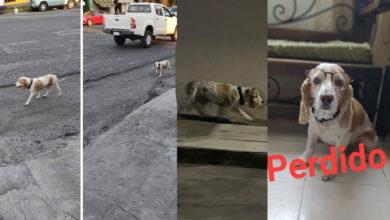 Photo of #AlertaPeluda Perrito anda perdido por toda la ciudad y no se deja agarrar